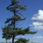 Beausoleil Island – Fairy Lake Trail (Georgian Bay Islands National Park) 2015-9-14